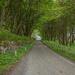 Shetland Trees