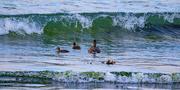 15th Jun 2021 - Facing the Surf