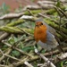 Who doesn't love a Robin?  by chesney_7