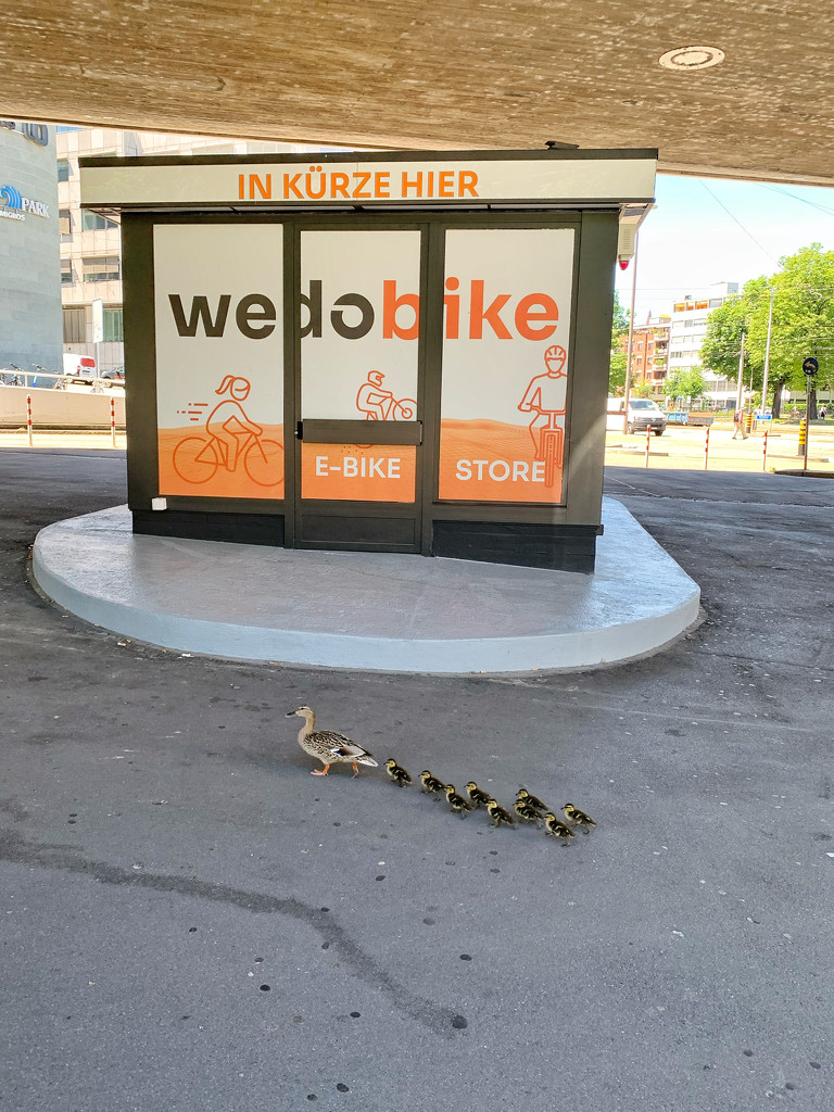 Duck in town.  by cocobella