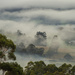 Trees in the mist by katford