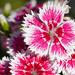 Flower 6 15 21