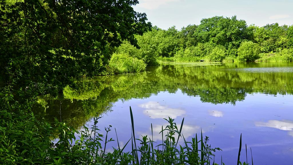 Fish Pond by tonygig