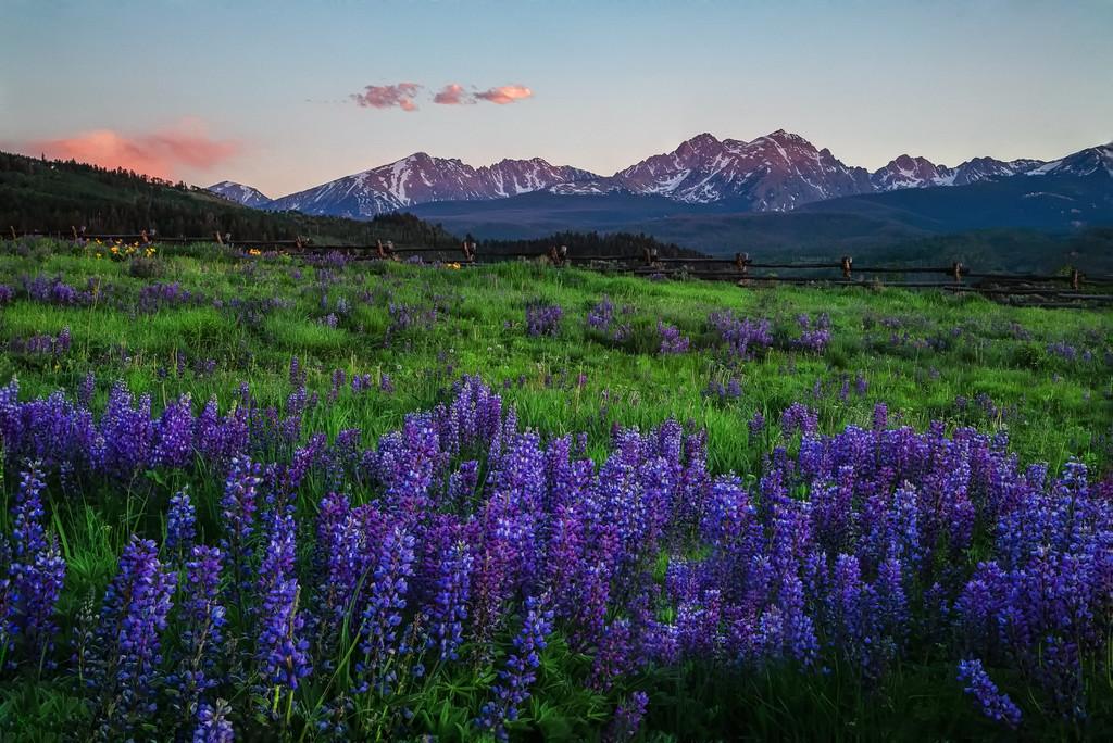 Mountain Lupine Oasis by exposure4u