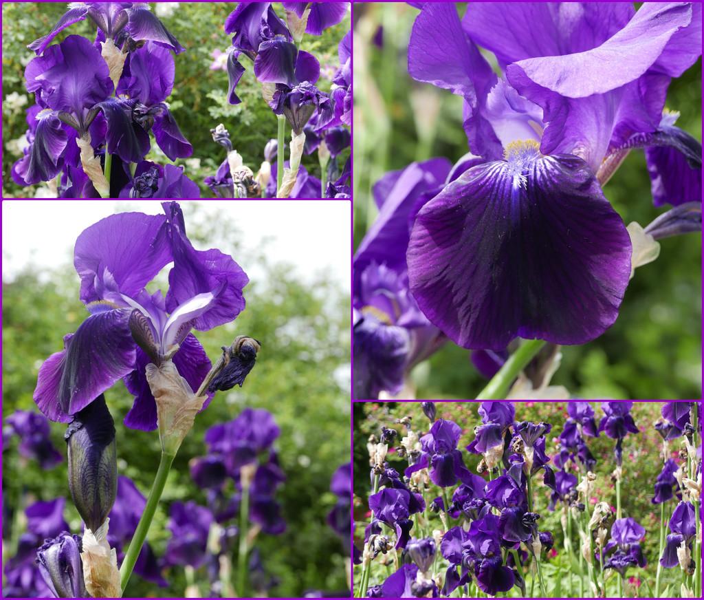 purple reigns by quietpurplehaze