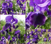 16th Jun 2021 - purple reigns