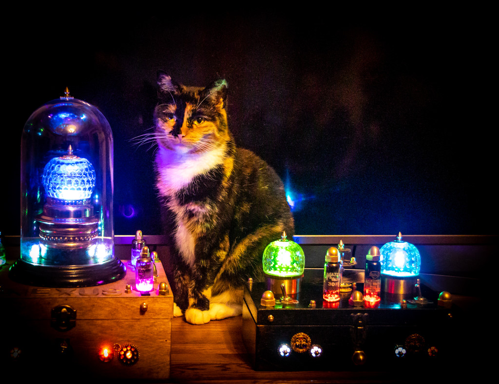 The time travellers cat by swillinbillyflynn