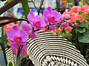 16th Jun 2021 - Orchid
