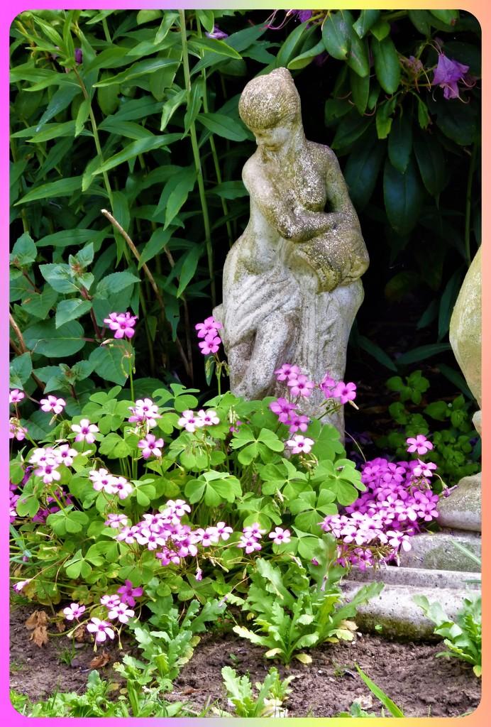 Pink flowers by beryl