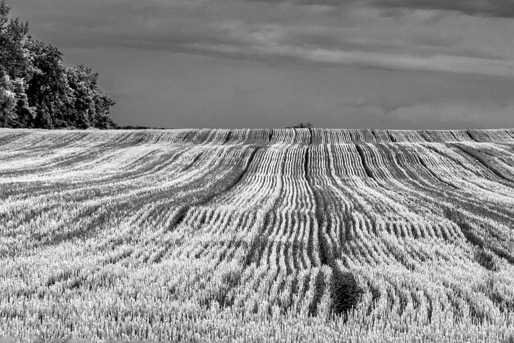 The Rolling Hills by farmreporter