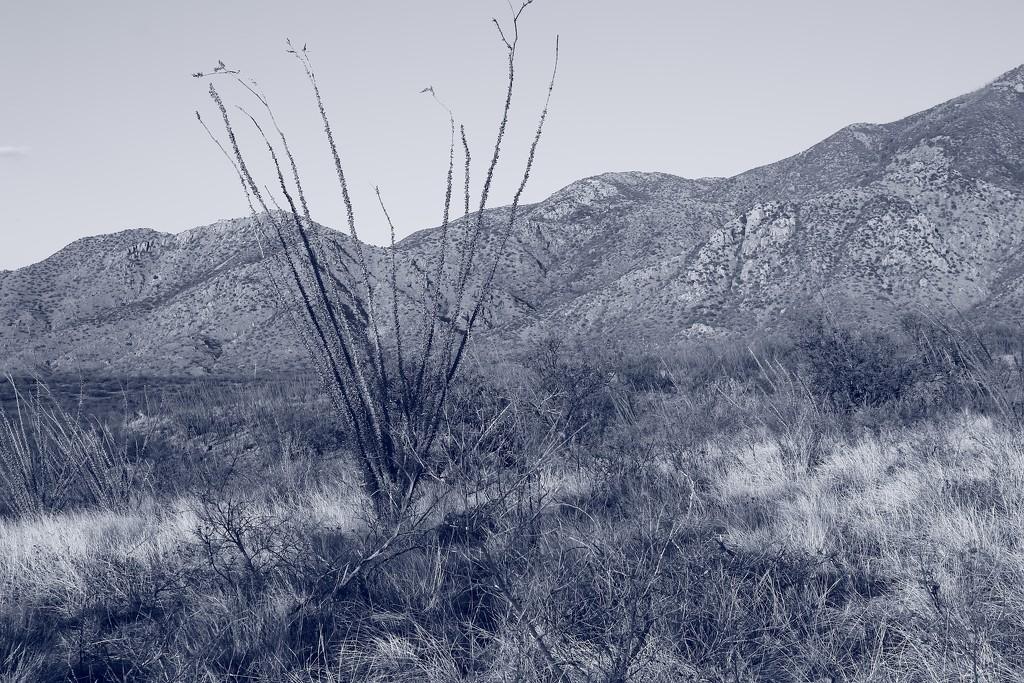 desert blues by blueberry1222