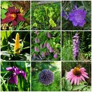 17th Jun 2021 - A Morning in the Garden
