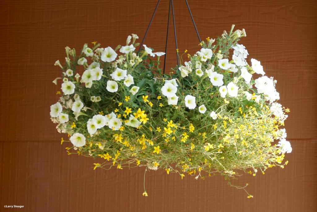 Basket of flowers by larrysphotos