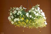 16th Jun 2021 - Basket of flowers