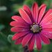 Flower a 6 15 21