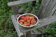 8th Jun 2021 - strawberry...