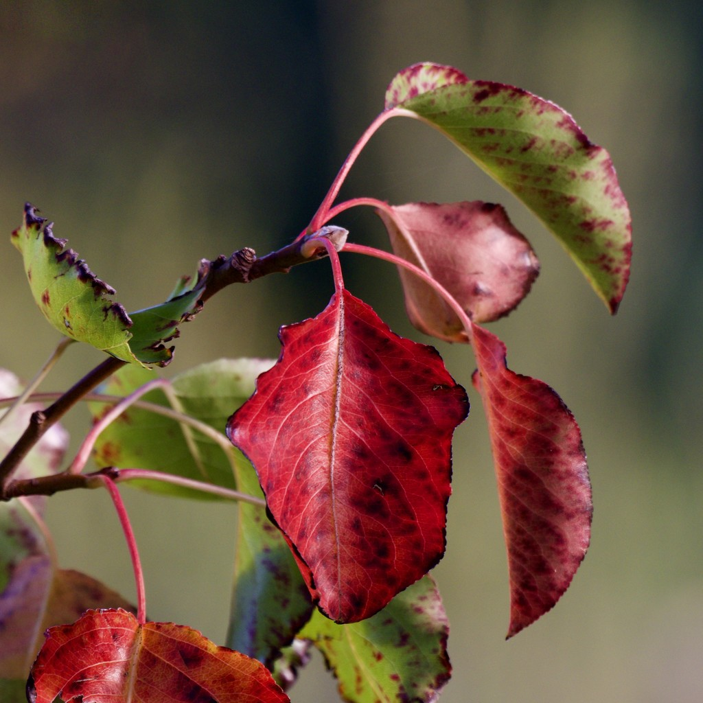 A Little Bit Of Foliage Colour _6170146 by merrelyn