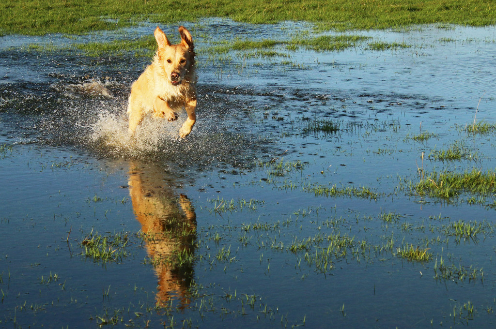 Fun In The Floods by shepherdman