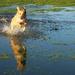 Fun In The Floods