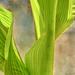 Twirling leaves