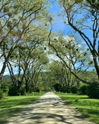 12th Jun 2021 - Avenue of trees