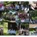 Hanover Garden Club June Picnic