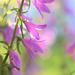 Wildflowers by lynnz