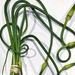Garlic Scapes by njmom3