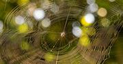 17th Jun 2021 - Sunlit Web!
