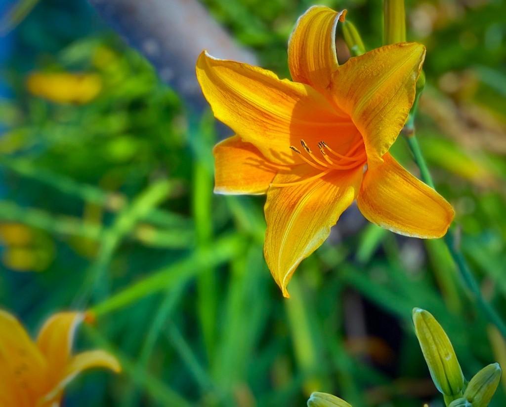 Sunshine by gardenfolk