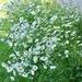 Wicken Flowers