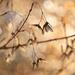 Maple seeds  by fr1da