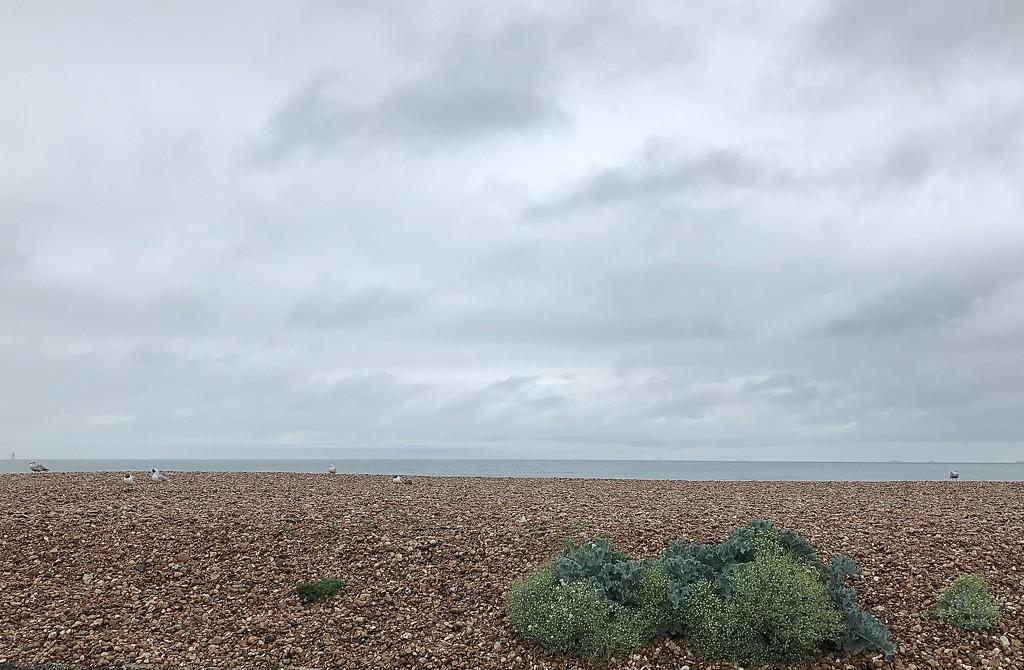 Bleak and grey by wakelys