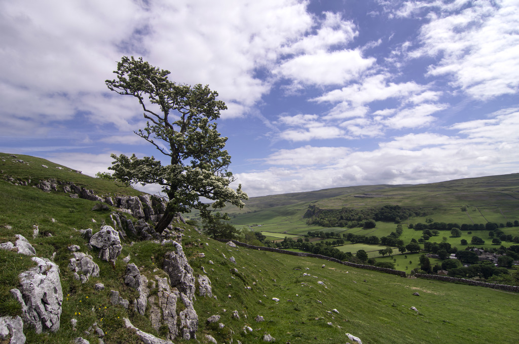Hawthorn above Littondale by fueast