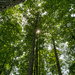 Tall Trees by k9photo