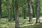 18th Jun 2021 - Stand of trees