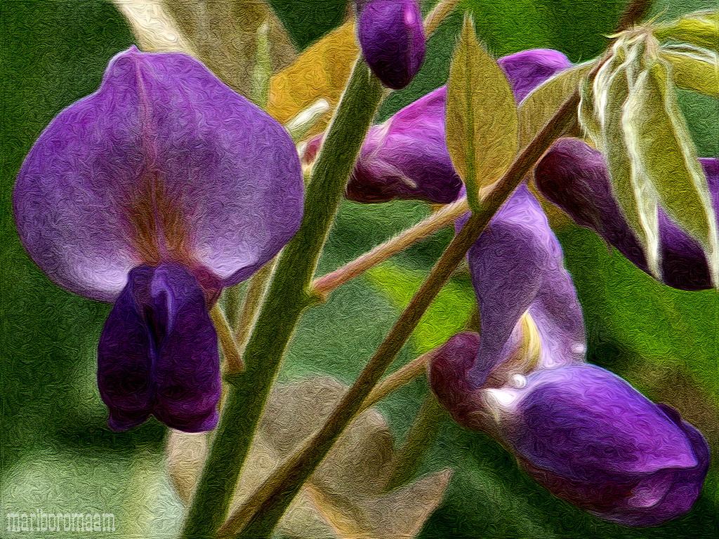 A few blossoms worth a paint job... by marlboromaam