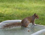 18th Jun 2021 - ~Squirrel~