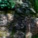 wet rocks and foliage