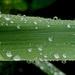 Still wet by casablanca