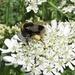 Full of pollen!