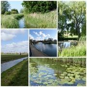 19th Jun 2021 - Watery East Anglia