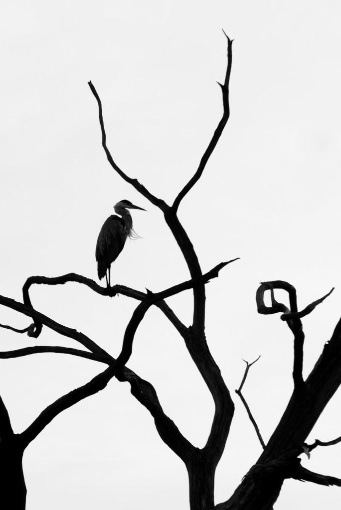From Heron In by 30pics4jackiesdiamond