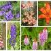 Another Garden Snapshot