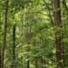 Just a few hardwood trees...