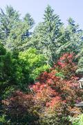 19th Jun 2021 - Morning Trees