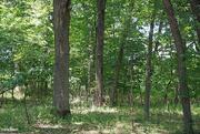 19th Jun 2021 - Woods