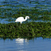 Egret by snoopybooboo