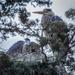 Great Blue Heron Rookery by nicoleweg