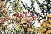 5th Jun 2021 - autumn into winter